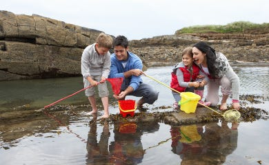 Children exploring rockpools
