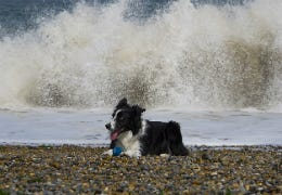 Border Collie on Norfolk beach