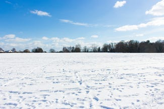 Snowy Norfolk Field