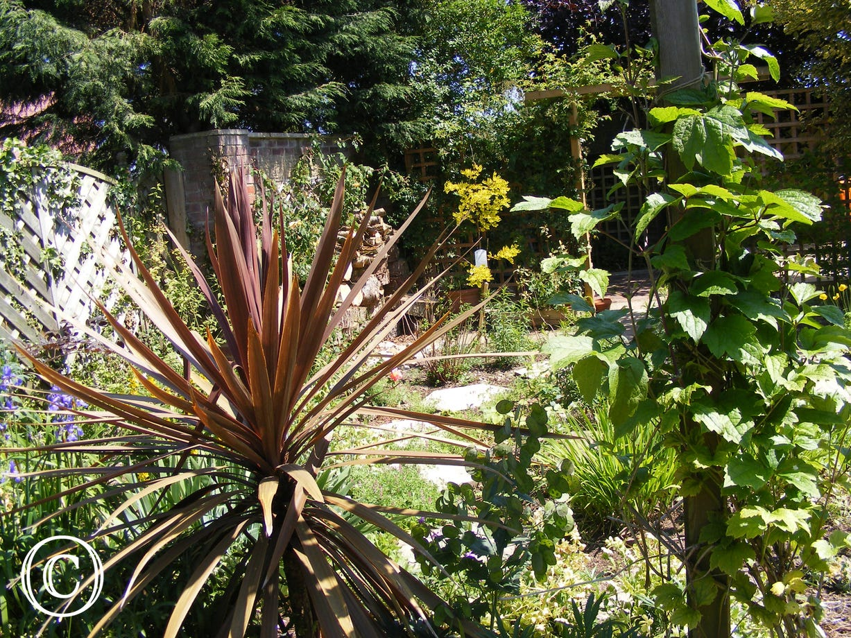 Fully established plants in the garden